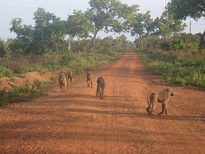 Climat Ghana Temp 233 Rature Pr 233 Cipitations Quand Partir